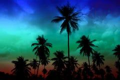 silhouetkokosnoot in het hoogtepunt coldl hemel van het tuinlandbouwbedrijf stock fotografie