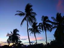 Silhouetkokospalmen tijdens zonsondergang royalty-vrije stock foto's