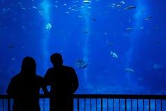 Silhouetpaar voor een aquarium stock foto