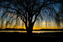 Silhouett tree. Silhouette tree against a sunset and a lake. blue to yellow skies fading into the lake behind the tree Royalty Free Stock Images