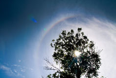 Silhouettak van boom Stock Afbeeldingen