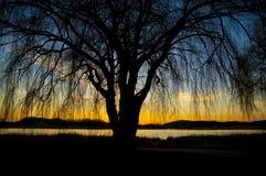 Silhouettboom Royalty-vrije Stock Afbeeldingen
