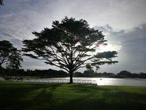 Silhouette big tree Stock Photography