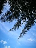 Silhouette plam tree leaves and blue sky Stock Images