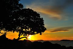 Silhouette вал и заход солнца Стоковая Фотография