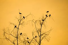 Silhouette ветви и птицы дерева с апельсином, небом захода солнца Стоковое Изображение RF