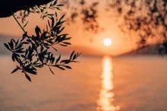 Silhouette ветвь оливкового дерева в свете восхода солнца утра теплом Форма Солнця над Средиземным морем Bokeh отражения луча Сол стоковые изображения