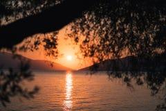 Silhouette ветвь оливкового дерева в свете восхода солнца утра теплом Форма Солнця над Средиземным морем Bokeh отражения луча Сол стоковые фото