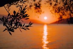 Silhouette ветвь оливкового дерева в свете восхода солнца утра теплом Форма Солнця над Средиземным морем Bokeh отражения луча Сол стоковое фото