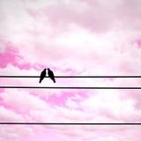 Silhouette влюбленность чувства пар голубя на электрическом проводе Стоковая Фотография