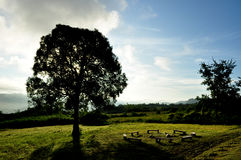 Silhouette дерево, пожар лагеря и ясное небо Стоковые Фотографии RF