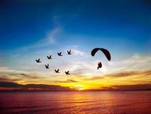Silhouette летящие птицы и мотор para над небом захода солнца моря стоковое фото
