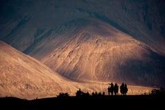 Silhouette изображение каравана в пустыне Hunder, долины верблюдов Nubra стоковое фото
