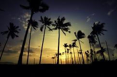 Silhouette изображение кокосовой пальмы, солнечного света и драматического облака Стоковое Фото