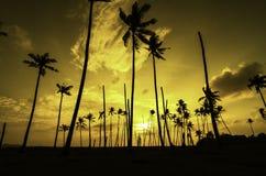Silhouette изображение кокосовой пальмы, солнечного света и драматического облака Стоковые Изображения