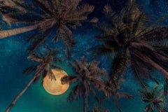 Silhouette пальма кокоса с полнолунием и млечным путем ga Стоковые Изображения RF