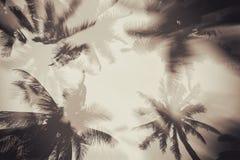 Silhouette пальма с влиянием двойной экспозиции в винтажной предпосылке фильтра Стоковые Изображения RF