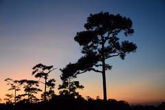 Silhouette предпосылка деревьев раньше Стоковое фото RF