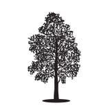 Silhouette разделенная береза дерева с листьями, иллюстрациями вектора Стоковое Изображение