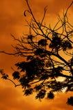 silhouette Arkivbilder