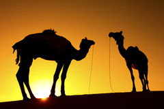 Silhouette of 2 Camels Royalty Free Stock Photography