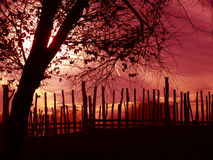 Silhouette. D tree and the fence Royalty Free Stock Photos