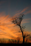 Silhouette. A barren tree silhouetted against an evening sky stock photography