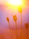 Silhouette abstraite d'usine au coucher du soleil Image libre de droits