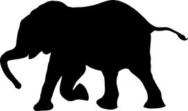 Silhouette of a african desert elephant calw, walking. Digitally hand drawn vector illustration Stock Photo