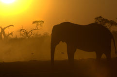 Silhouette of African Elephant Royalty Free Stock Photo