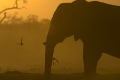 Silhouette of African Elephant Royalty Free Stock Image