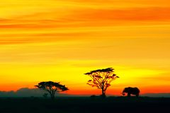 Silhouette of African elephant against the backdrop of the sunset in the Serengeti National Park. Africa. Wildlife of Tanzania. Free copy space royalty free stock photos