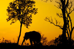 Silhouette of african elephant Stock Images