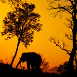 Silhouette of african elephant Stock Image