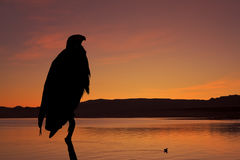 The silhouette of the African Fish - Eagle Royalty Free Stock Photo