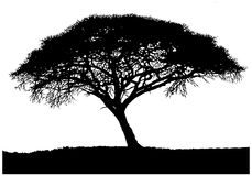 Silhouette of the African tree. Isolated on white background stock photography