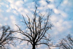 Ominous trees Royalty Free Stock Photography