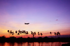 Silhouette of airplane with coconut tree. Stock Image