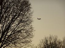 Airplane flying behind a silhouette tree Royalty Free Stock Photo