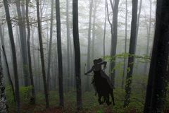 Silhouette of an amazon warrior woman riding a horse in forest Royalty Free Stock Photography