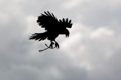 Silhouette of American Bald Eagle flying in Otavalo, Ecuador Royalty Free Stock Photo