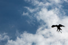 Silhouette of American Bald Eagle flying in Otavalo, Ecuador Royalty Free Stock Photography