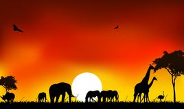 Silhouette of animals wildlife. Beauty silhouette of animals wildlife in Africa Stock Images