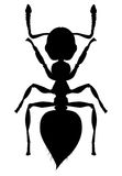 Silhouette Ant Crematogaster. African ant  settled in Italy is called Crematogaster Stock Photo