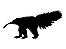 Silhouette of anteater Royalty Free Stock Photo