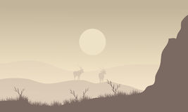 Silhouette of antelope in fields Royalty Free Stock Images