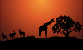 Silhouette of antelope and giraffe Stock Images