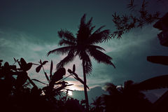 Silhouette of asian exotic jungle, palms and other Stock Images