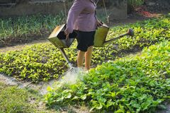 Silhouette of Asian farmer woman waters vegetable field.  Royalty Free Stock Image