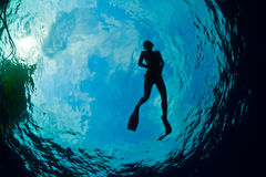 Silhouette of an attractive female snorkeler. A young woman snorkeling in The Caribbean Royalty Free Stock Image